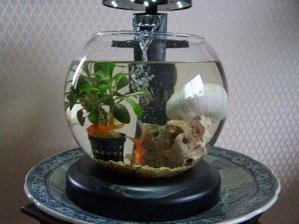 Aquarium for Aquarium boule
